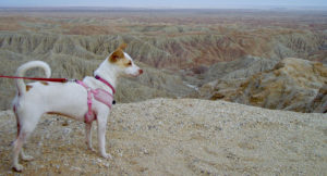 Crickets Desert Adventure