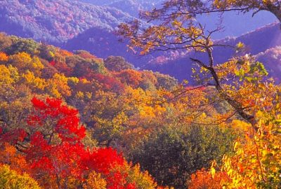 Newfound Gap Fall Color