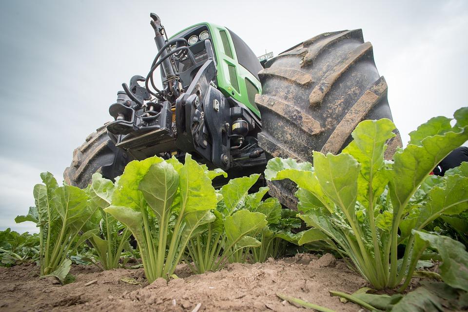 Sugar Beet Harvest Workamping Jobs