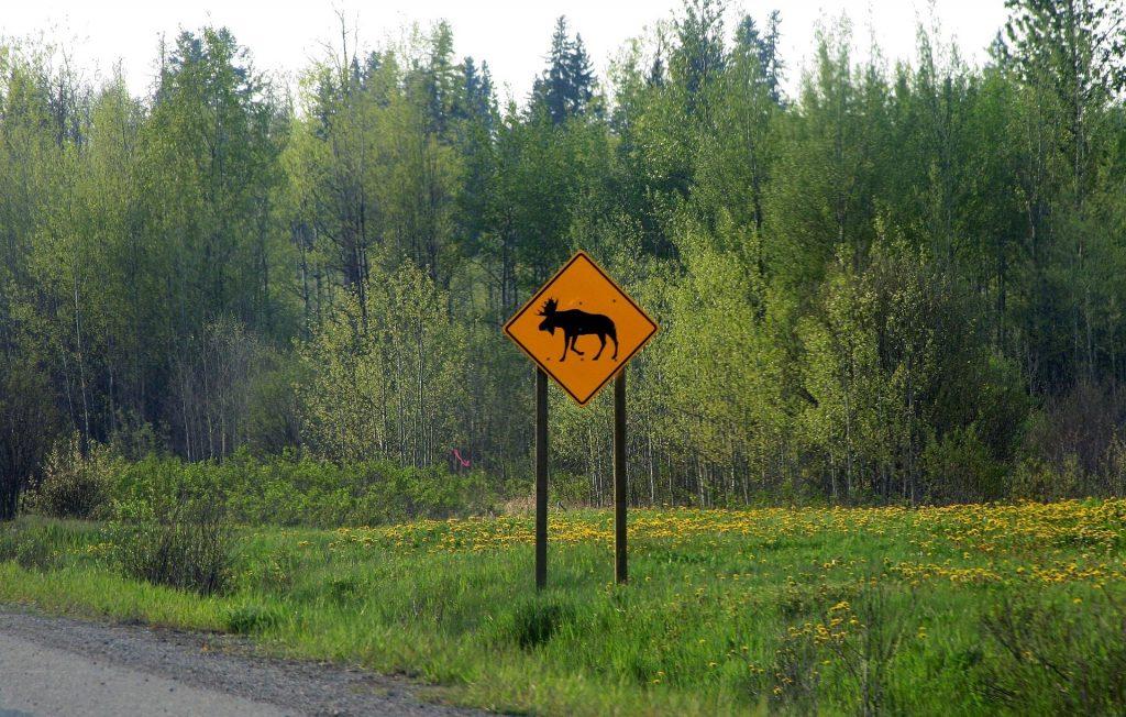 Highway sign warning of moose crossing