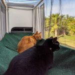 Two cats resting in outdoor enclosure